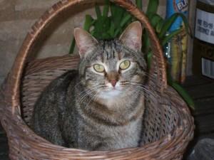 le chat com Villejuif