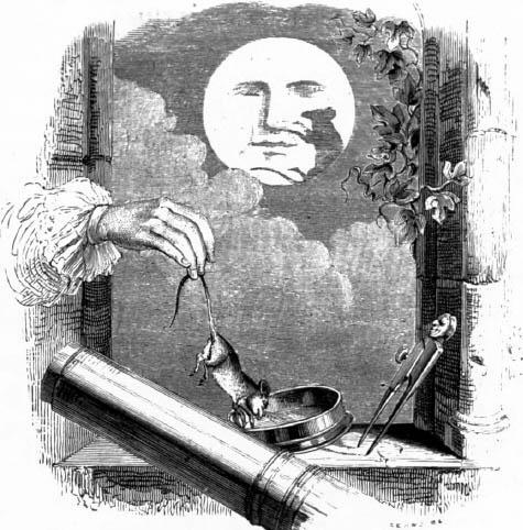 un-animal-dans-la-lune